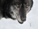 Der mit dem Wolf tanzt – Blogbuster2017