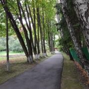 Die Birkenallee, die zu dem Haus führt…